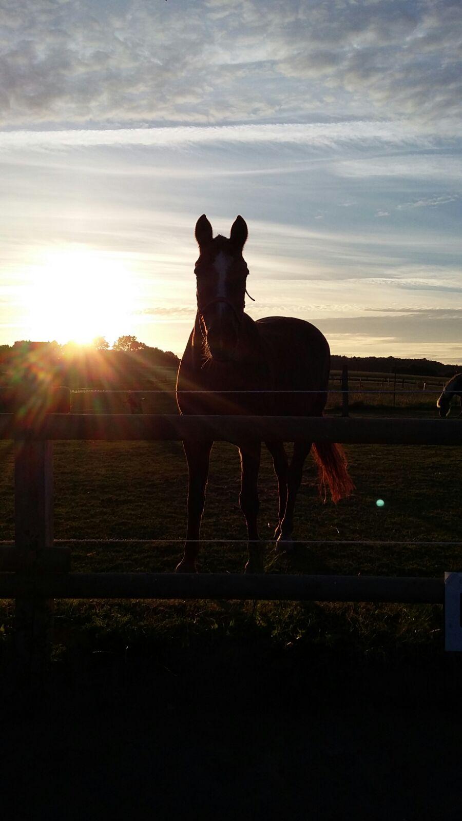 Mein Pferd im Gegenlicht